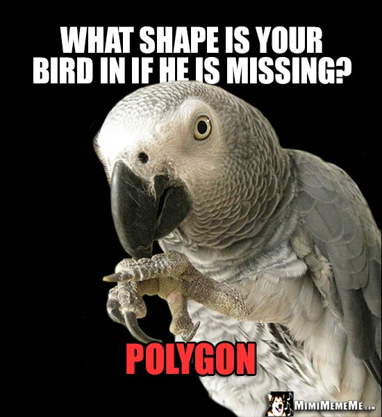 African Grey Parrot Asks: What shape is your bird in if he is missing? Polygon