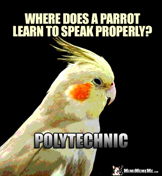 Smart Bird Riddle: Where does a parrot learn to speak properly? Polytechnic