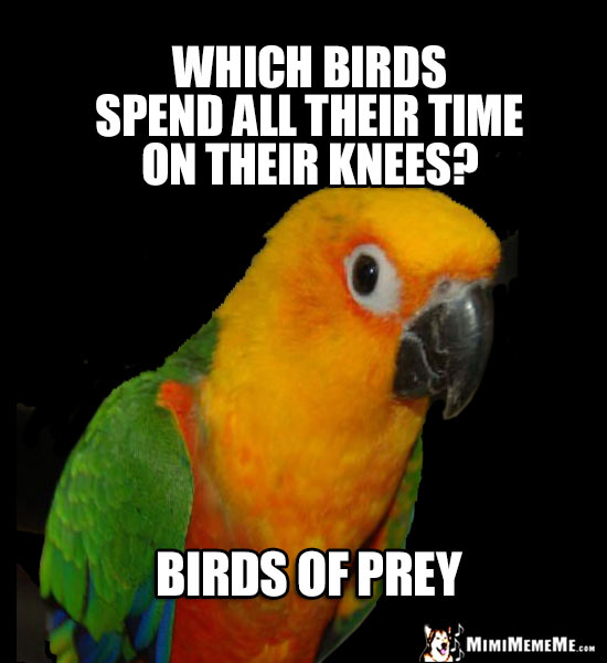 Curious Parrot Wants to Know: Which birds spend all their time on their knees? Birds of Prey