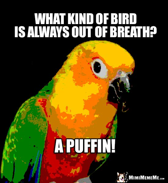 Parrot Asks: What kind of bird is always out of breath? A Puffin