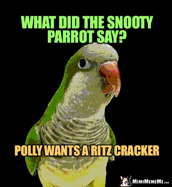 Parrot Asks: What did the snooty parrot say? Polly wants a Ritz Cracker