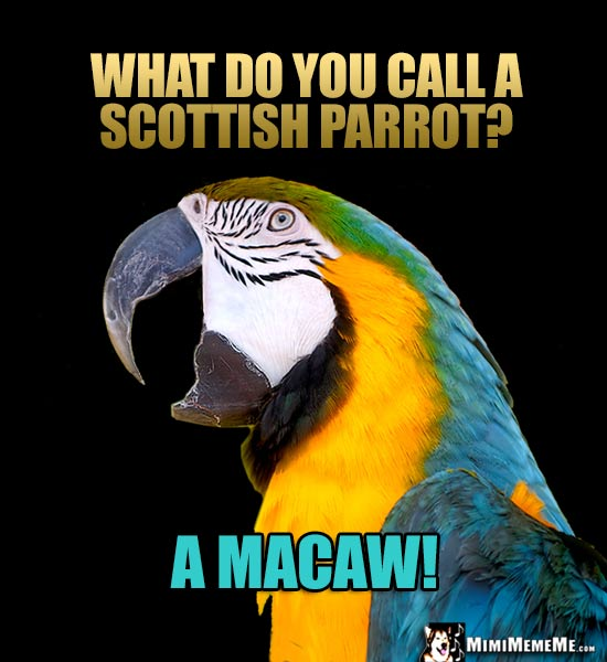 Parrot Joke: What do you call a Scottish parrot? A Macaw!