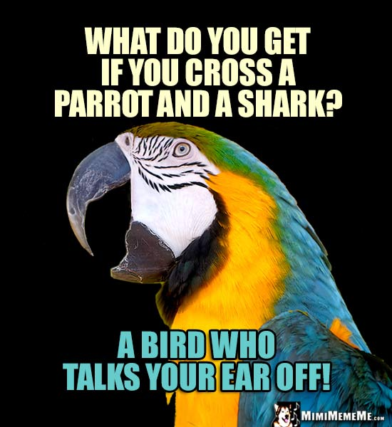 Macaw Says: What do you get if you cross a parrot and a shark? A bird who talks your ear off!