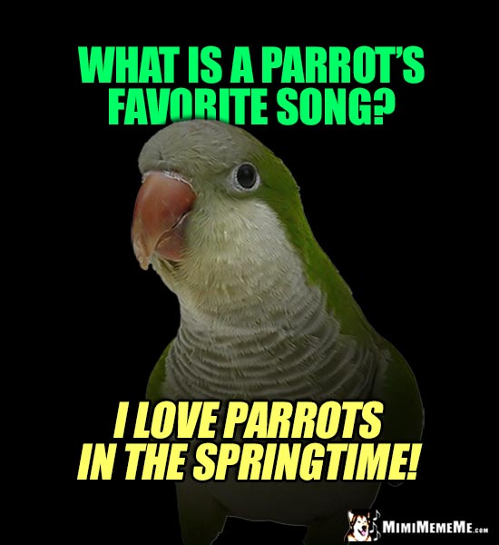 Romantic Parrot Asks: What is a parrot's favorite song? I Love Parrots in the Springtime!