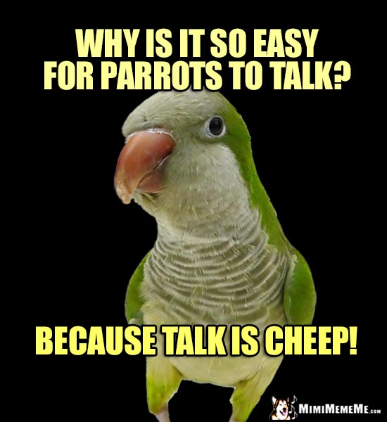 Quaker Parrot Asks: Why is it so easy for parrots to talk? Because talk is cheep!