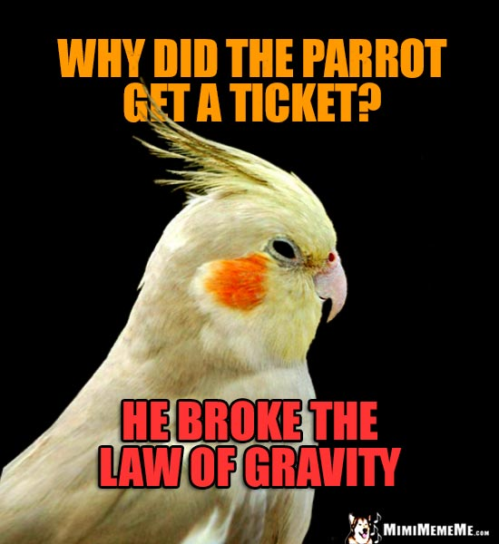 Cockatiel Asks: Why did the parrot get a ticket? He broke the law of gravity.