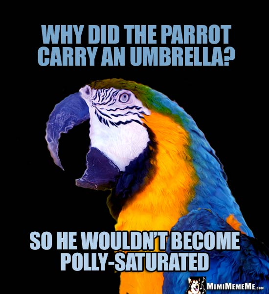 Funny Macaw Asks: Why did the parrot carry an umbrella? So he wouldn't become Polly-Saturated