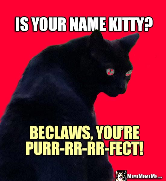 Black Cat Asks: Is your name Kitty? Beclaws, you're purr-rr-rr-fect!