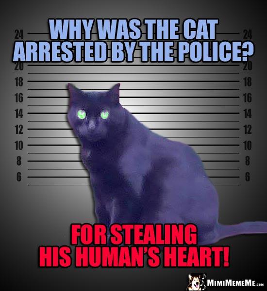 Mugshot Cat Asks: Why was the cat arrested by the police? For stealing his human's heart!