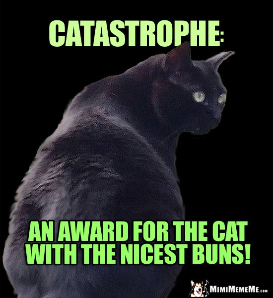 Funny Black Cat Says, Catastrophe: An award for the cat with the nicest buns!