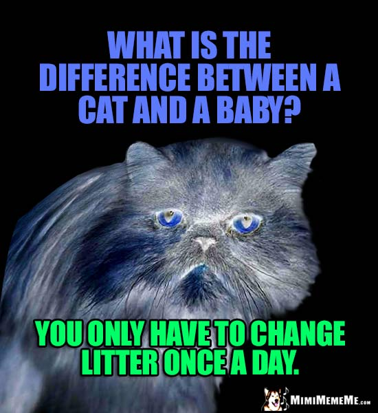 Cat Riddle: What is the difference between a cat and a baby? You only have to change litter once a day.
