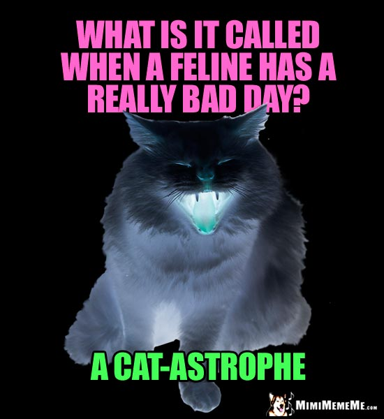 Dark Cat Meme: What is it called when a feline has a really bad day? A Cat-astrophe