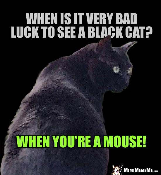 Black Cat Joke: When is it very bad luck to see a black cat? When you're a mouse!