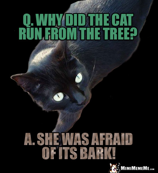 Cat Riddle: Q. Why did teh cat run from the tree? A. She was afraid of its bark!