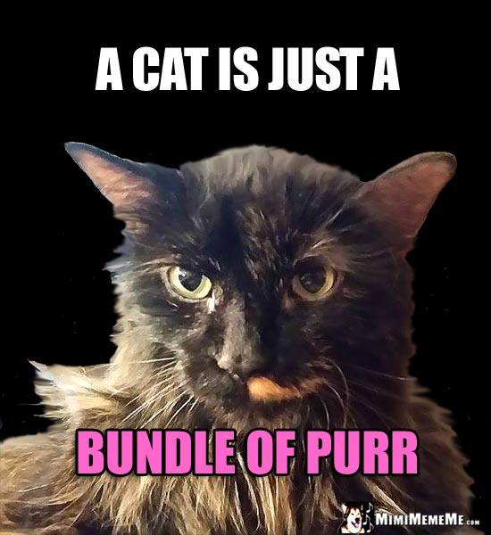 Cat Humor: A cat is just a bundle of purr