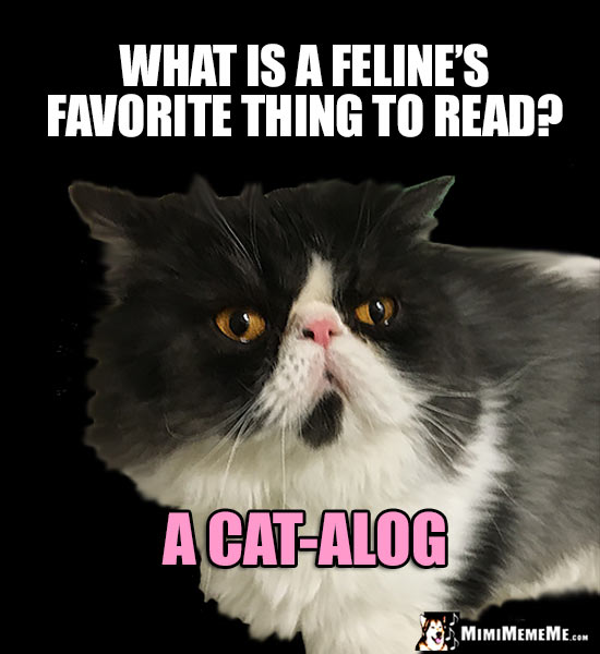 Smart Cat Asks: What is a feline's favorite thing to read? A Cat-alog