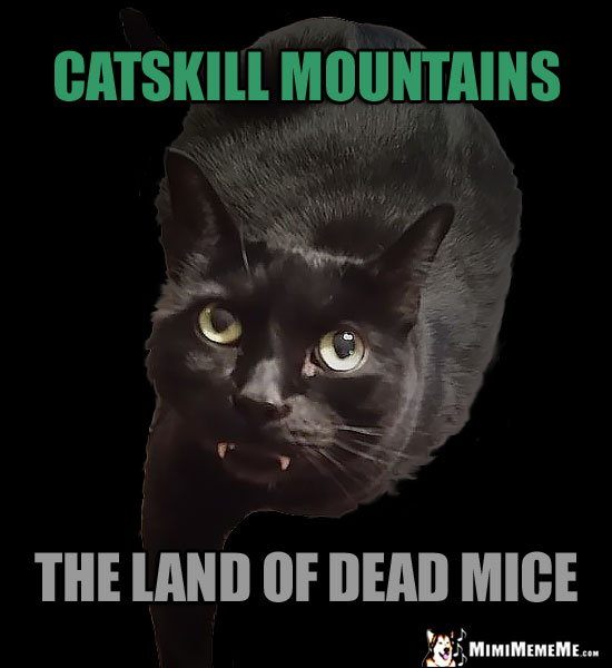 Fang Cat Humor: Catskil Mountains, the land of dead mice.