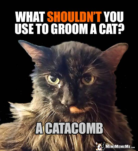 Humorous Cat Tips: What shouldn't you use to groom a cat? A Catacomb