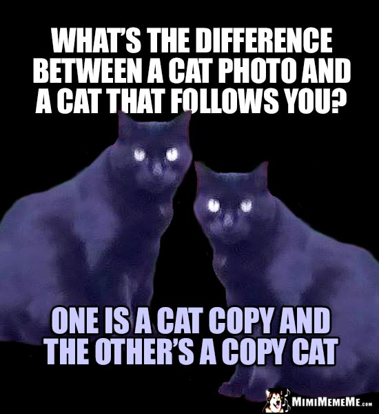 Cat Riddle: What's the difference between a cat photo and a cat that follows you? One is a cat copy and the other's a copy cat.