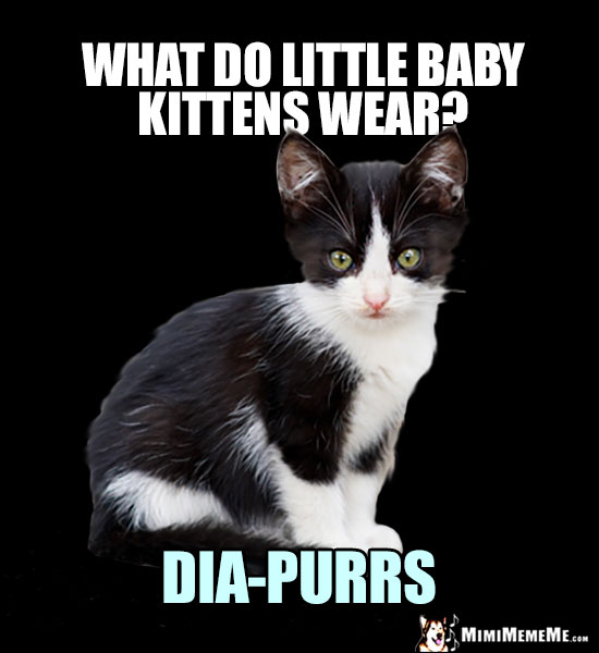Little Kitty Riddle: What do little baby kittens wear? Dia-Purrs