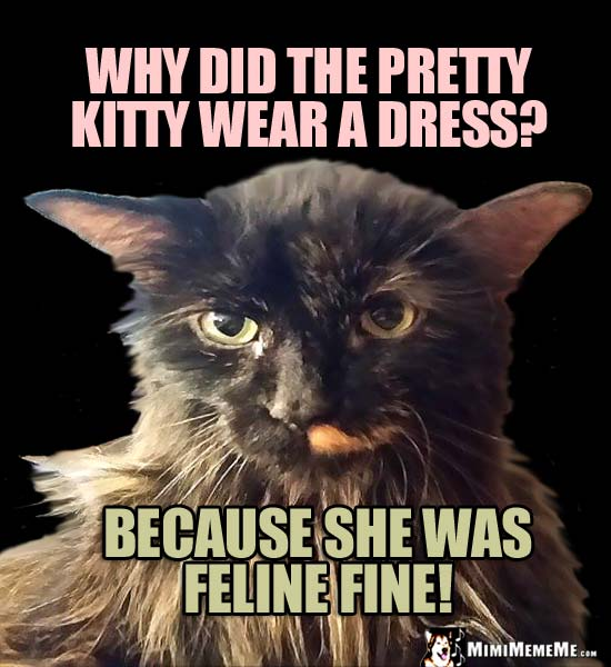 Pretty Cat Humor: Why did the pretty kitty wear a dress? Because she was feline fine!
