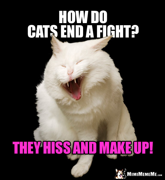 Laughing Cat Meme: How do cats end a fight? They hiss and make up!