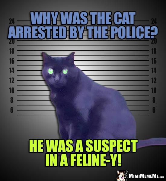 Mugshot Cat Photo: Why was the cat arrested by the police? He was a suspect in a Feline-y!