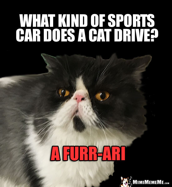 Funny Cat Trivia: What kind of sports car does a cat drive? A Furr-Ari