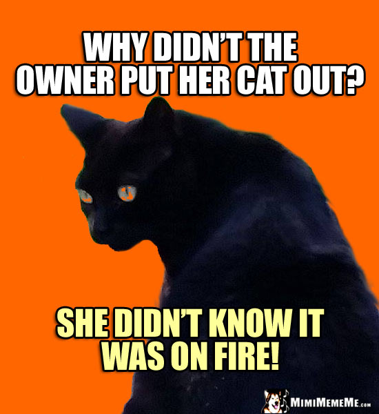 Black Cat Humor: Why didn't the owner put her cat out? She didn't know he was on fire!