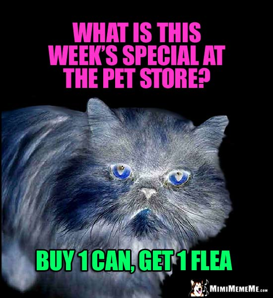 Funny Cat Riddle: What is this week's special at the pet store? Buy 1 Can, Get 1 Flea