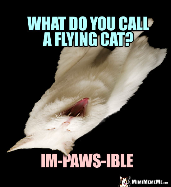 Cat Riddle: What do you call a flying cat? Im-paws-ible