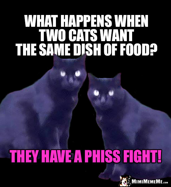 Cat Riddle: What happens when two cats want the same dish of food? They have a phiss fight!