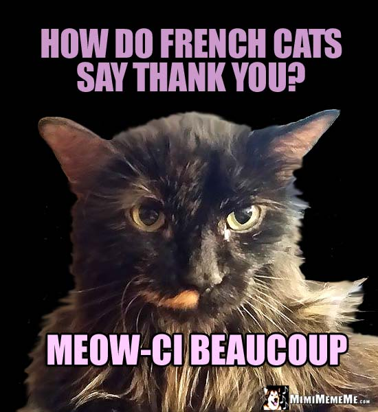Pretty Kitty Asks: How do French cats say thank you? Meow-ci Beaucoup