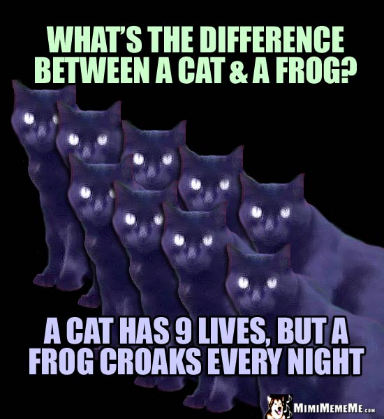 Cat Joke: What is the difference between a cat & a frog? A cat has 9 lives, but a frog croaks every night