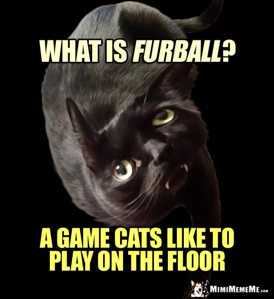 Twisted Cat Asks: What is Furball? A game cats like to play on the floor.