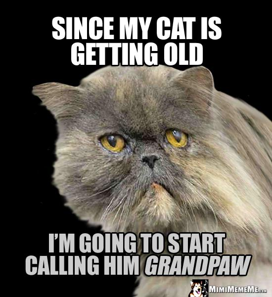 Cat Humor: Since my cat is getting old, I'm going to start calling him GrandPaw