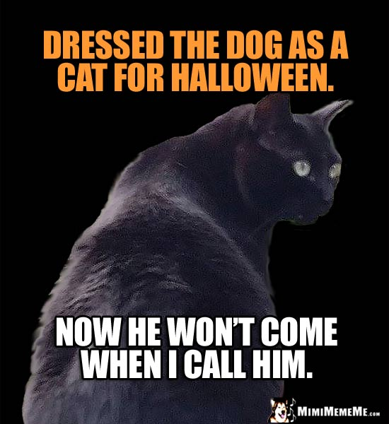 Cat Treat Humor: Dressed the dog as a cat for Halloween. Now he won't come when I call him.