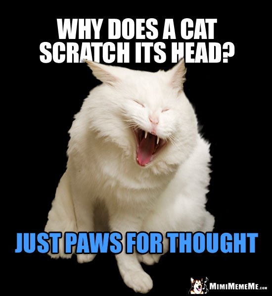 Laughing Cat Asks: Why does a cat scratch his head? Just paws for thought