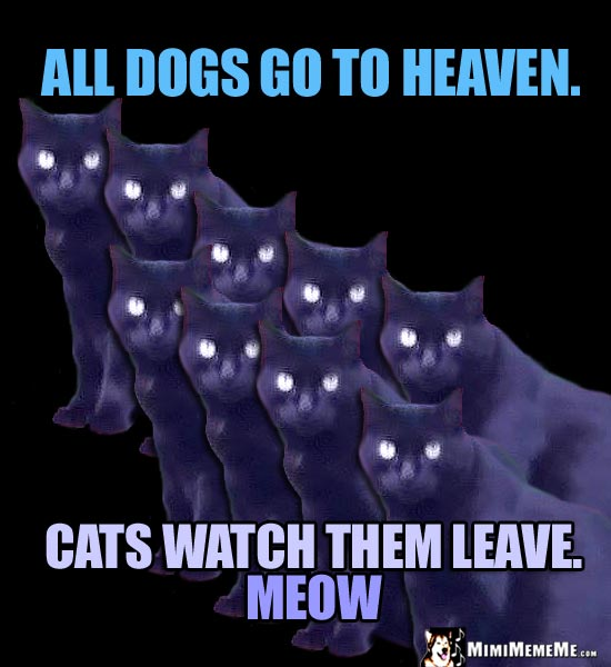 Sick Cat Humor: All dogs go to heaven. Cats watch them leave. Meow