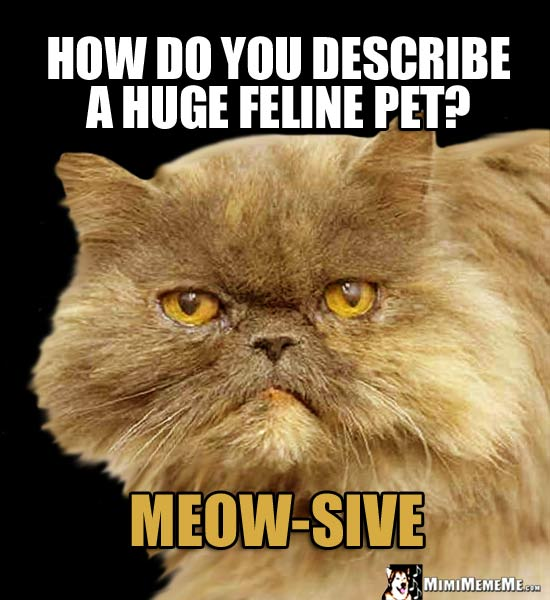 Fat Cat Asks: How do you describe a huge feline pet? Meow-Sive