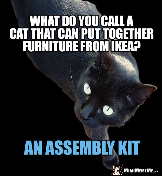 Cat Riddle: What do you call a cat that can put together furniture from Ikea? An Assembly Kit