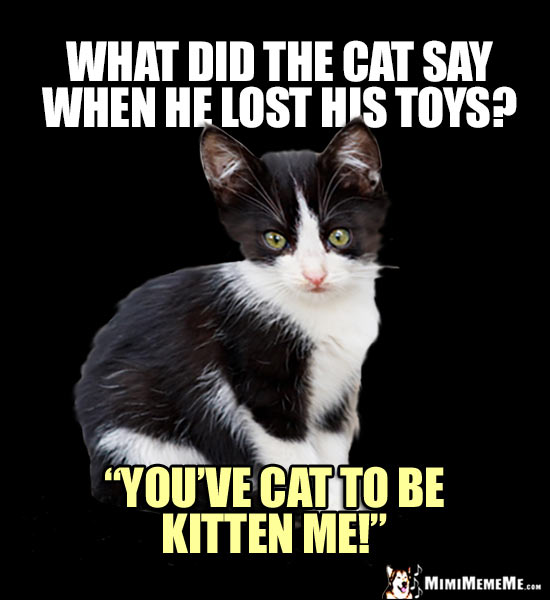 Curious Kitten Wants to Know: What did the cat say when he lost his toys? You've cat to be kitten me!