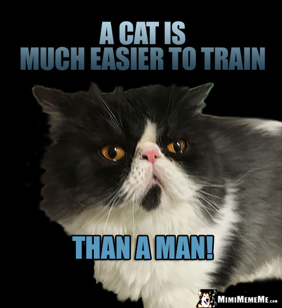 Dignified Cat Comments: A cat is much easier to train than a man!