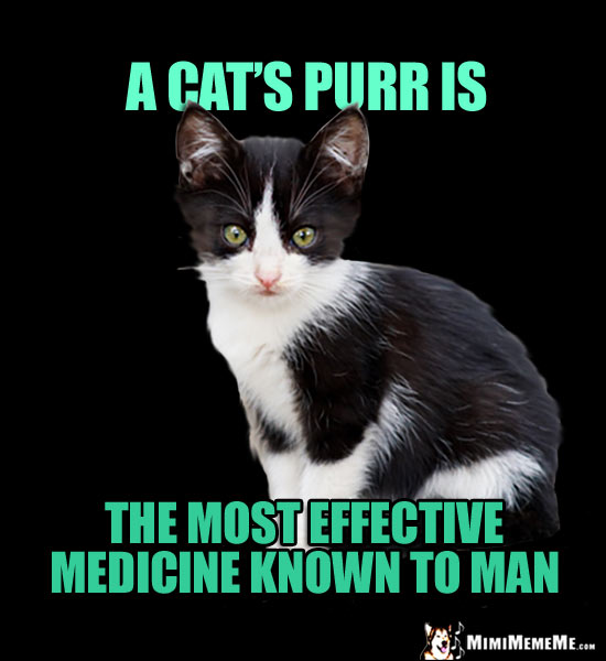 Kitten Says: A cat's purr is the most effective medicine known to man
