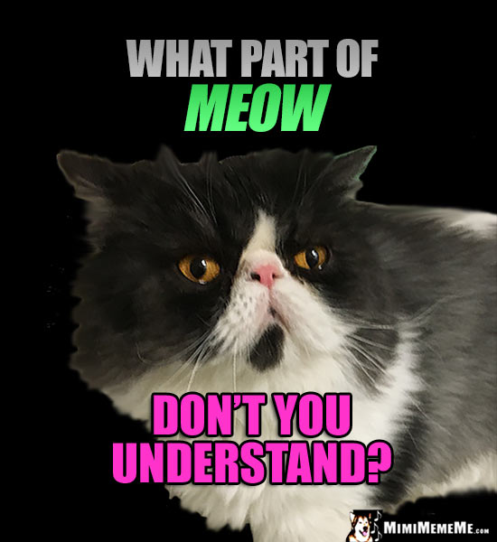 Big Face Cat Asks: What part of MEOW don't you understand?