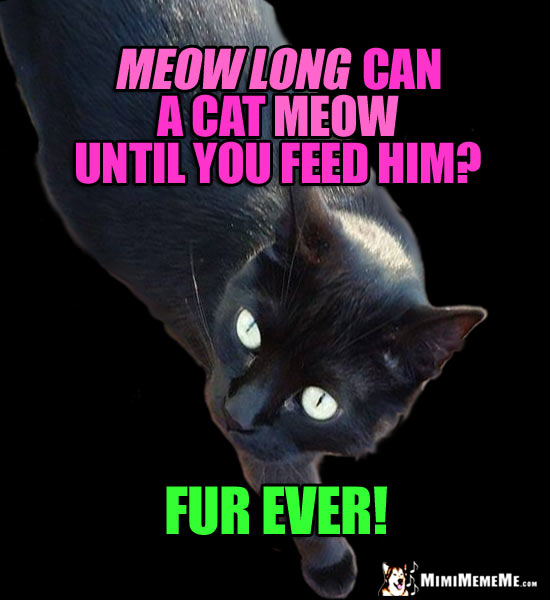 Humorous Cat Conundrum: Meow long can a cat meow until you feed him? Fur Ever!
