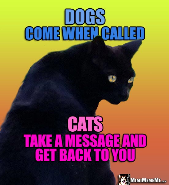 Black Cat Says: Dogs come when called. Cats take a message and get back to you.