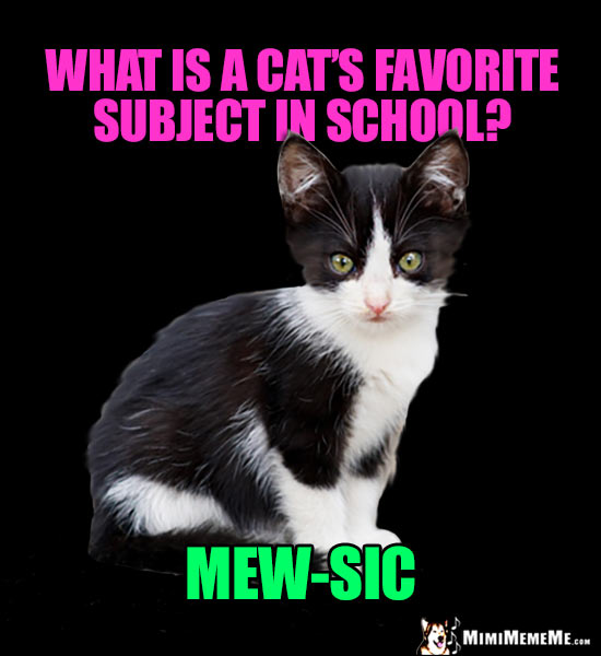 Kitten Asks: What is a cat's favorite subject in school? Mew-Sic