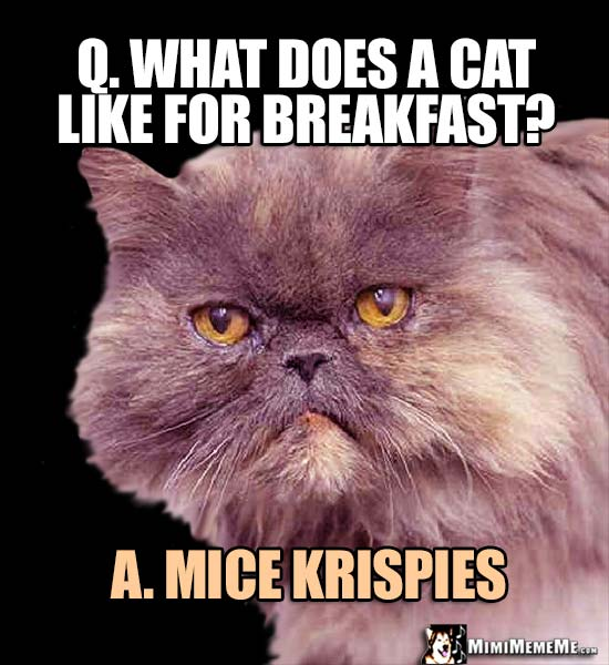 Fat Cat Riddle: Q. What does a cat like for breakfast? A. Mice Krispies