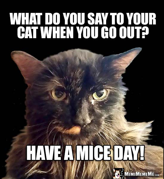 Cat Question of the Day: What do you say to your cat when you go out? Have a Mice Day!